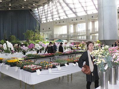 「大阪フラワー・ガーデンショー」での品評会。全国の切花・鉢物が集合