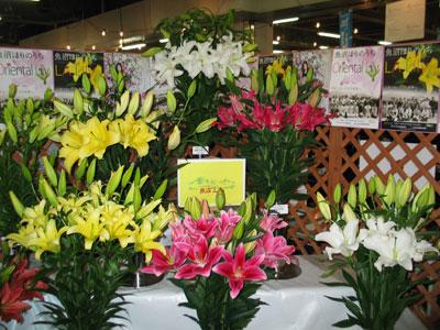 新潟の北魚沼農協とほりのうち花き園芸組合によるユリの展示 新潟の北魚沼農協とほりのうち花き園芸組