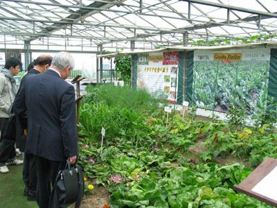 イタリア野菜の温室。ズッキーニや赤チコリなど紹介
