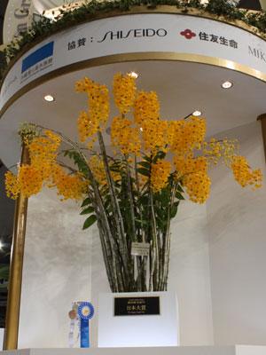日本大賞を受賞した永井清さんのデンドロビューム フィンブリアタム オクラタム「ロング ウェル」