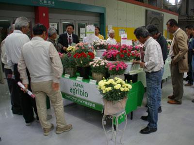 大田市場でジャパンアグリバイオがポットカーネと切花品種を展示