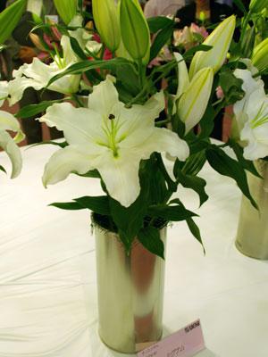 オリエンタルユリ巨大輪「シグナム」。白花で花弁の幅が広い