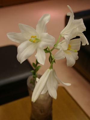 原種「マドンナリリー」。聖母マリアに捧げられたという