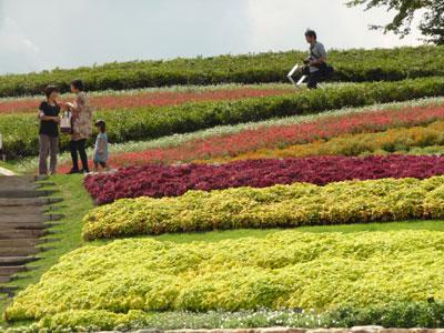 丘の斜面に花々がカラフルな波模様を描く「馬見花苑」