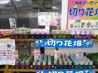 角田ナーセリー展示会で「切り花畑」シリーズは用途別に新提案