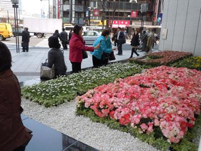 銀座から被災地へエール、ソニースクエアに鉢物でお見舞いの花飾り