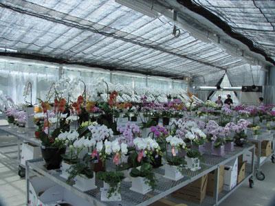 川崎北部市場内にオープンした「オーキッドハウス」はモテギ洋蘭園の商品を展示販売