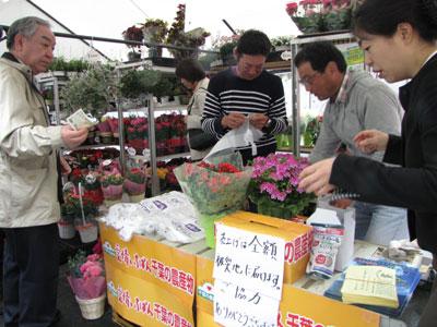 千葉特産の鉢花をチャリティー販売、被災地を応援