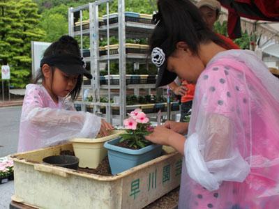 被災地に送るプランターにニチニチソウを植える子どもたち