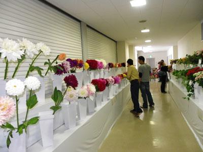 京都生花トレードフェアで主要商品の展示