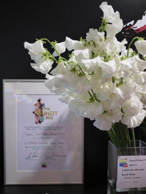 IPMエッセン新品種コンテストで最優秀賞を受賞、尾鈴農協出品のスイートピー「ロイヤルホワイト」