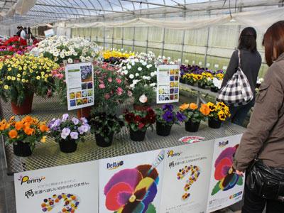 シンジェンタジャパンが成田シードセンター研究農場で品種展示