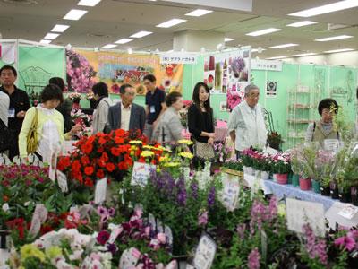 第1回「夏の花々とペチュニア展」で多彩な品種と魅力をアピール