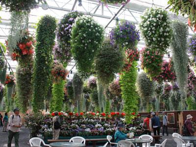花鳥園グループが空中花壇を出展。大温室の天井一面を花々で彩る(井の頭公園)