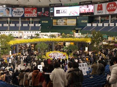 東京ドームに10万株が咲き競う「世界らん展日本大賞2013」