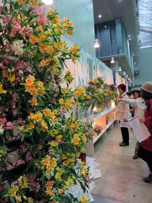 「フラワー&ガーデンショウ」でシンボルフラワーのアルストロメリア展示