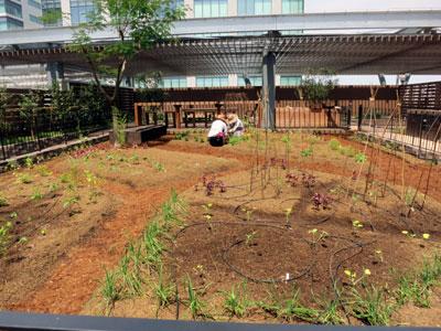 屋上に大規模な菜園・果樹園の「みんなの庭」を設置