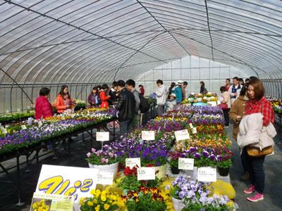 最新の花き・野菜品種を紹介