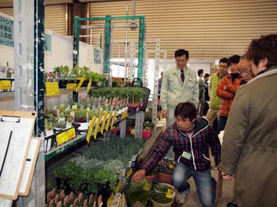 10回を迎えた花満得選会。地元・広島県花卉園芸農協鉢物部会の出展