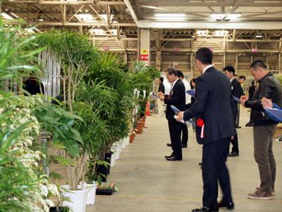 豊明花きで観葉品評会