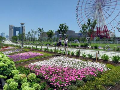 臨海副都心のシンボルプロムナード公園で夏花壇のおもてなし