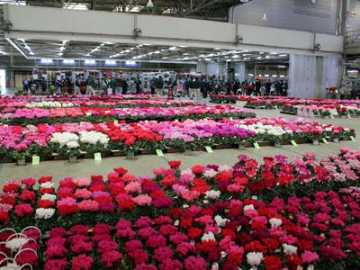 豊明花きで鉢花・蘭品評会。全国の優品が競う