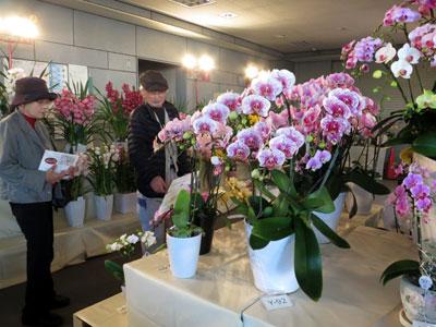 冬の花を一堂にそろえ、一般を対象にフラワーコンテスト