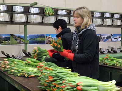 仲卸J.Barnboorn&Znはスーパーマーケット向けに輸出業者の依頼で花束を手組みで作成