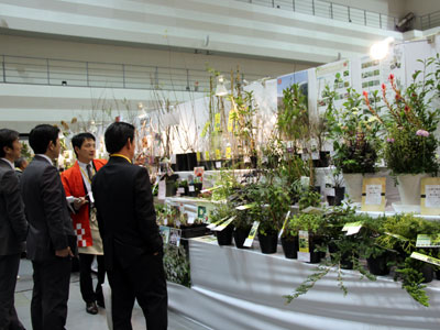 福花園種苗の見本市で多彩な品種展示・提案